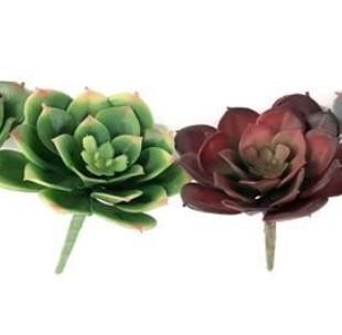 Flor Suculenta Permanente