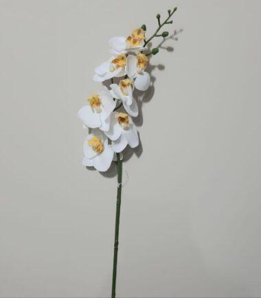 Orquídea Phalaenopsis Real Toque