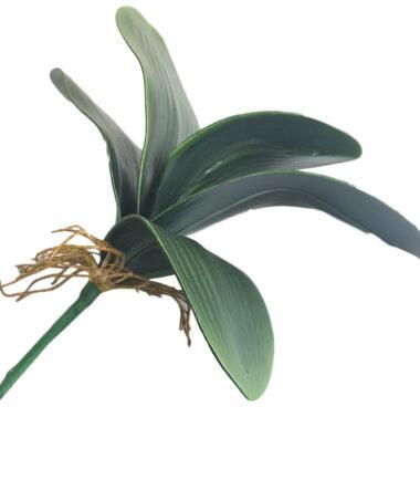 Folha de Orquídea G