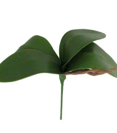 Folha de Orquídea P